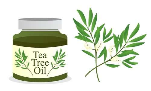 Tea Tree Oil Benefits For Skin, Face & Hair